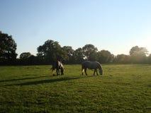 Pferde auf einem Gebiet lizenzfreies stockbild