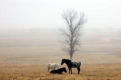 Pferde auf einem nebelhaften Gebiet Stockfotografie