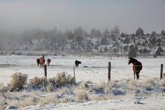Pferde auf einem nebeligen Gebiet Stockfotografie