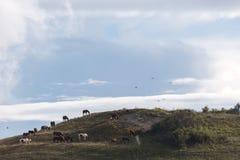Pferde auf einen Hügel und Fliegenvögel, unter einem tiefen, blauen s stockfotografie