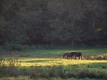 Pferde auf einer üppigen Wiese Lizenzfreies Stockfoto