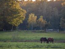 Pferde auf einer üppigen Wiese Stockbilder