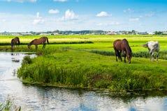 Pferde auf einer Bank Stockfotos