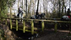 Pferde auf einer Hinterfahrt stock footage