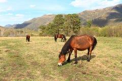 Pferde auf einer Lichtung Stockfotos