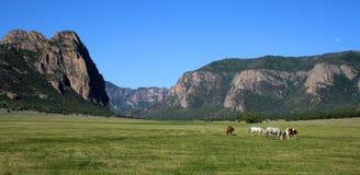 Pferde auf einer Ranch lizenzfreie stockfotos