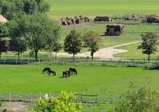 Pferde auf einer Ranch stockfoto
