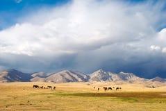 Pferde auf einer Weide Lizenzfreie Stockfotos