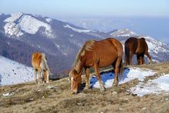 Pferde auf einer Weide Stockfoto