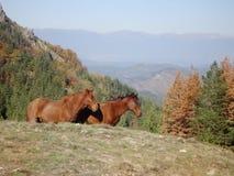 Pferde auf einer Weide im Berg Lizenzfreie Stockfotografie