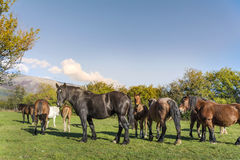 Pferde auf einer Weide im Berg Stockbild