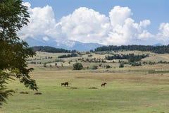 Pferde auf einer Weide im Berg Lizenzfreies Stockfoto