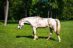 Pferde auf einer Wiese stockfoto