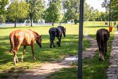 Pferde auf einer Wiese lizenzfreies stockfoto