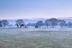 Pferde auf eisiger Weide während des nebelhaften Sonnenaufgangs Lizenzfreie Stockfotos