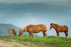Pferde auf grüner alpiner Weide Lizenzfreie Stockfotografie
