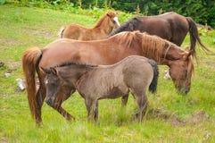 Pferde auf Natur Pferde lassen weiden Sch?ne Natur lizenzfreies stockfoto