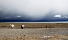 Pferde auf Seeufer Stockbild