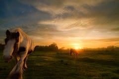 Pferde auf Sonnenuntergang-Landschaft Lizenzfreies Stockfoto