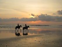 Pferde auf Sonnenuntergangstrand Stockbild