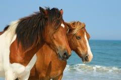 Pferde auf Strand stockfotografie