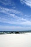 Pferde auf Strand Lizenzfreies Stockbild