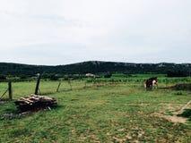 Pferde auf Weide Stockfotografie