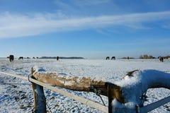 Pferde auf Weide Lizenzfreie Stockfotografie