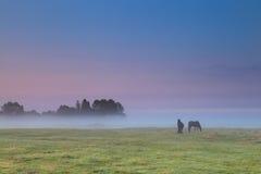 Pferde auf Weide bei Sonnenaufgang Stockbilder