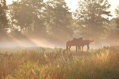Pferde auf Weide im dichten Nebel Lizenzfreie Stockfotografie