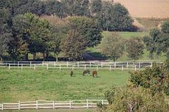 Pferde auf Weidenackerland Stockbild