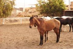 Pferde am Bauernhof stockbild