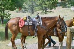 Pferde betriebsbereit zum Reiten Lizenzfreie Stockfotografie