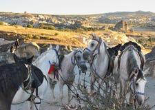Pferde in Capapdocia, die Türkei Stockfoto