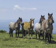 Pferde in den Bergen lizenzfreies stockbild
