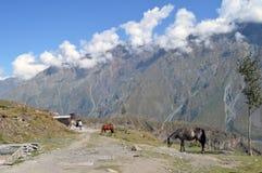 Pferde an den Bergen Lizenzfreies Stockbild