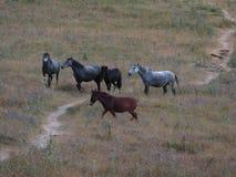 Pferde in den Bergen Lizenzfreie Stockbilder