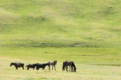 Pferde in den Bergen, pferdeartig, Nag, hoss, Kerbe, Dobbin lizenzfreies stockbild