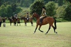 Pferde an den Dressageprüfungen Lizenzfreies Stockfoto