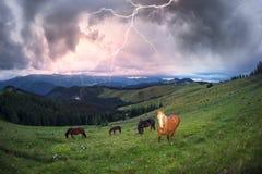 Pferde in den nebeligen Karpaten Stockfoto