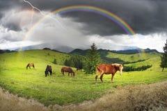 Pferde in den nebeligen Karpaten Stockbild