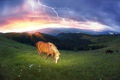 Pferde in den nebeligen Karpaten Lizenzfreies Stockbild