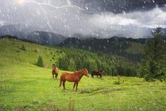 Pferde in den nebeligen Karpaten Stockbilder