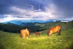 Pferde in den nebeligen Karpaten Lizenzfreies Stockfoto