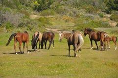 Pferde in den wild lebenden Tieren Stockbilder