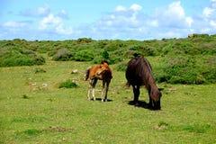 Pferde in der Freiheit Lizenzfreies Stockfoto