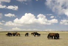 Pferde in der Gobi-Wüste Lizenzfreie Stockfotos
