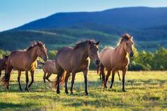 Pferde in der Herde stockfotos