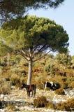 Pferde in der Landschaft Stockbild