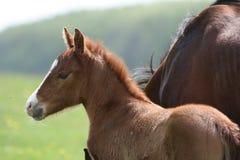 Pferde in der Landschaft Stockbilder